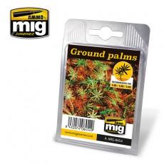 GROUND PALMS